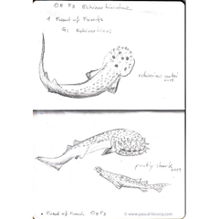 Carnet Bleu: Encyclopedia of…shark, vol.II p03 by Pascal