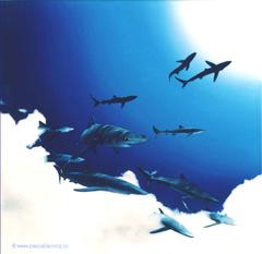 CROCS BLEUS - Blue fangs - by Pascal