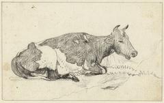 Liggende koe, naar rechts