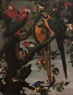 Perroquets et autres oiseaux