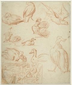 Schetsen van een compositie en verschillende vogels