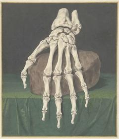 Skelet van een hand