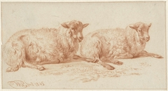 Studie van twee liggende schapen