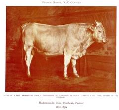 Study of a Bull
