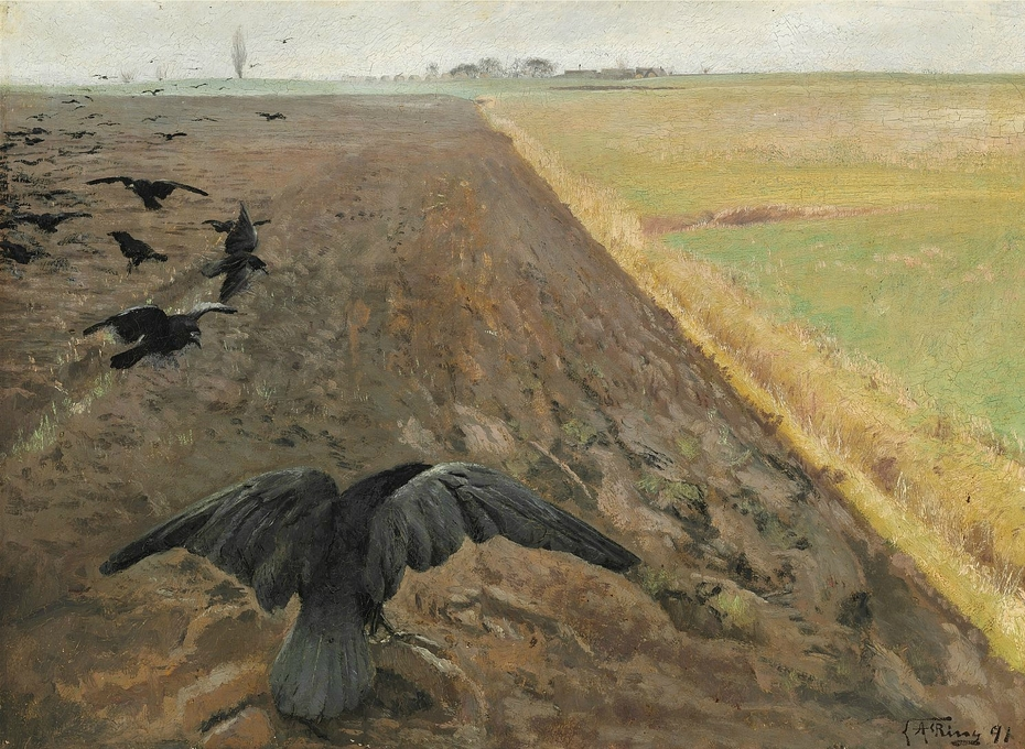 Rooks on the plowed field
