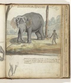 Wilde olifant tussen bomen gebonden