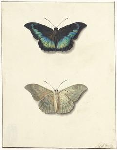 Boven- en onderaanzicht van een vlinder