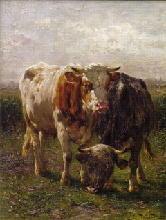Bull and cow in the floodplains at Oosterbeek