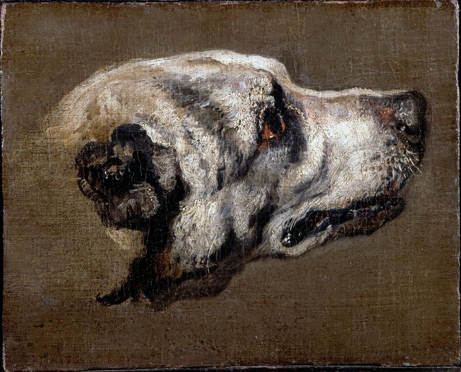 Head of a Hound