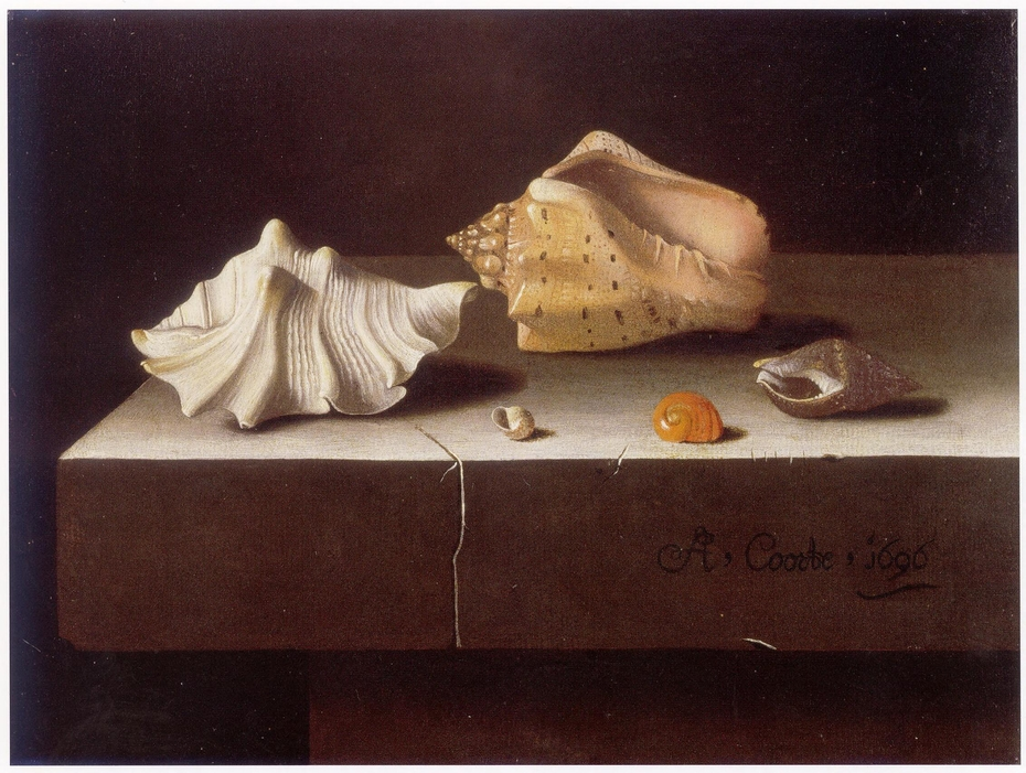 Still life with two large and three smaller shells