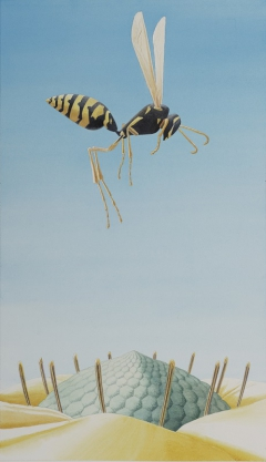 Wasp study