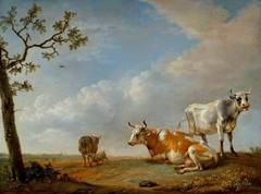 Animals Resting in the Pasture