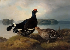 Black Grouse, Cock and Hen