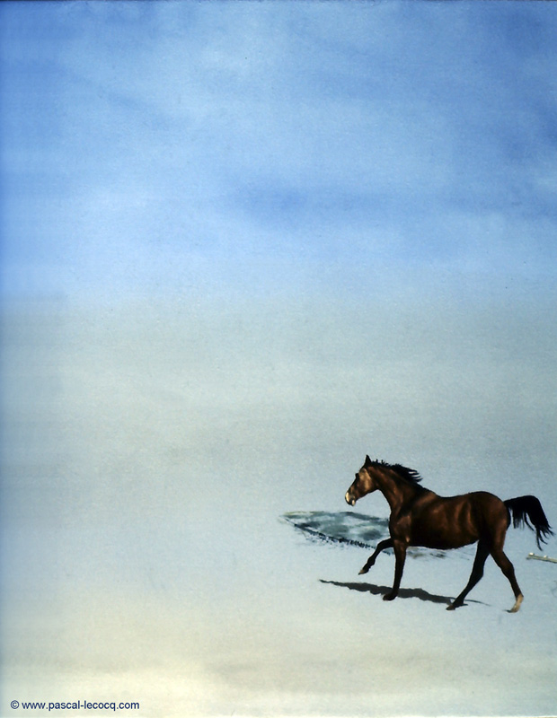 CHEVAL EPI - Horse Groin - by Pascal