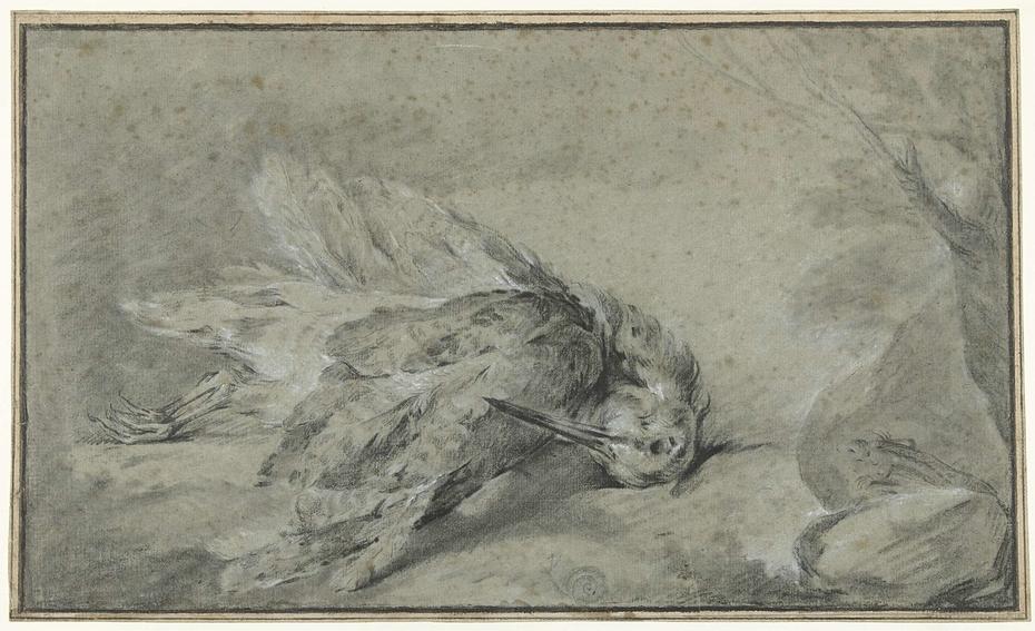 Dode vogel (snip?)