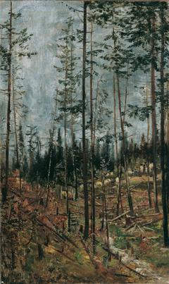 Forest Trail at Gödöllö