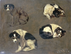 Four Studies of a Dog