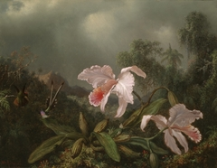 Jungle Orchids and Hummingbirds