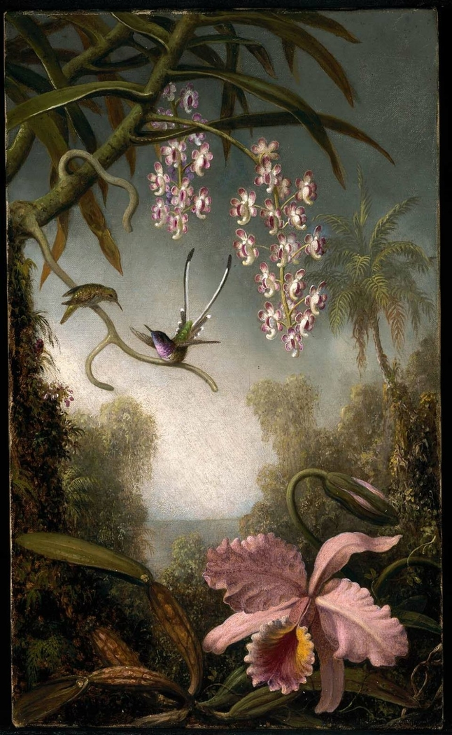 Orchids and Spray Orchids with Hummingbird