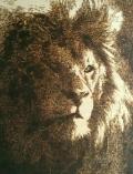 Potrait of a lion