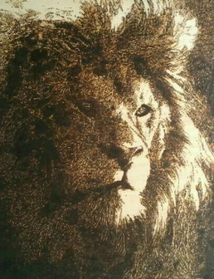 Potrait of a lion