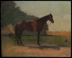 Saddle Horse in Farm Yard