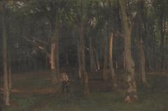 Skov ved solnedgang