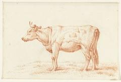 Staande koe, naar links