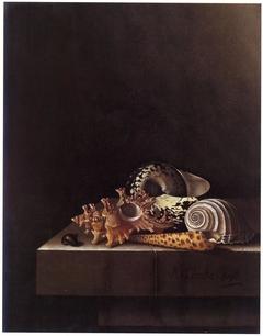 Still Life with Shells
