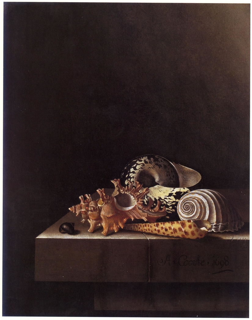 Still Life with Shells