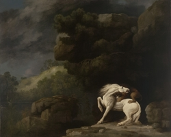 A Lion Attacking A Horse