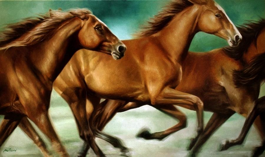 Cavalos / Horses