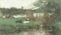 Eenden bij het water
