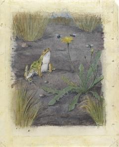 Kikker bij een paardebloem met vliegen
