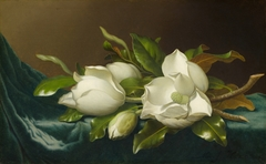 Magnolias on Light Blue Velvet Cloth