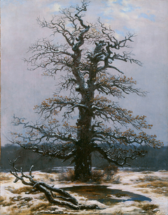 Oak in the Snow