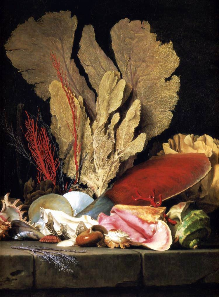 Still-Life with Tuft of Marine Plants, Shells and Corals