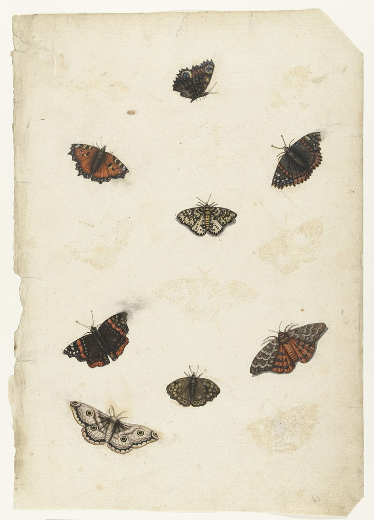 Acht vlinders
