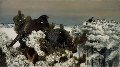 Capercaillies in a Winter Landscape
