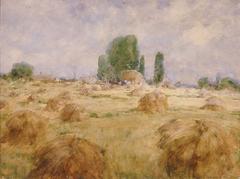Field of Wheat Shock