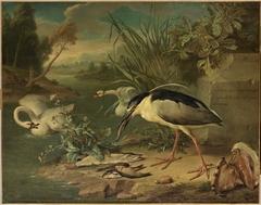 Fishing bird, swans and fish