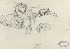 Schetsen van leeuwen