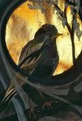 Starling dusk