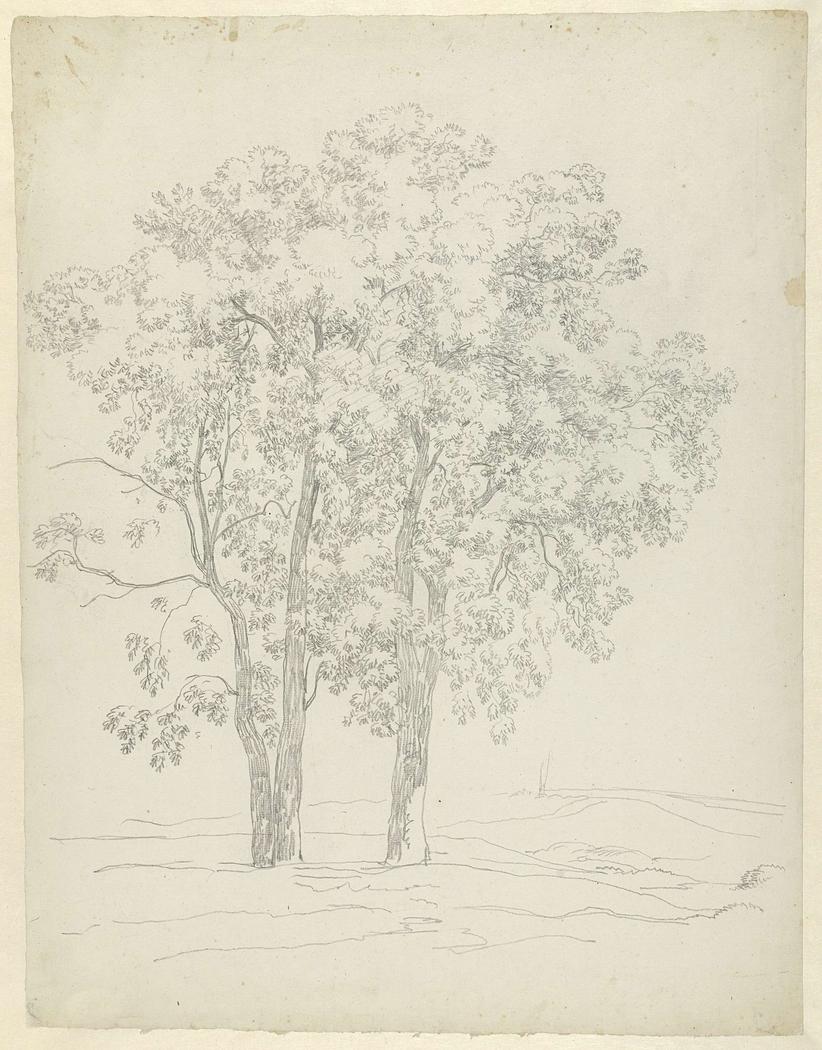 Studie van drie bomen