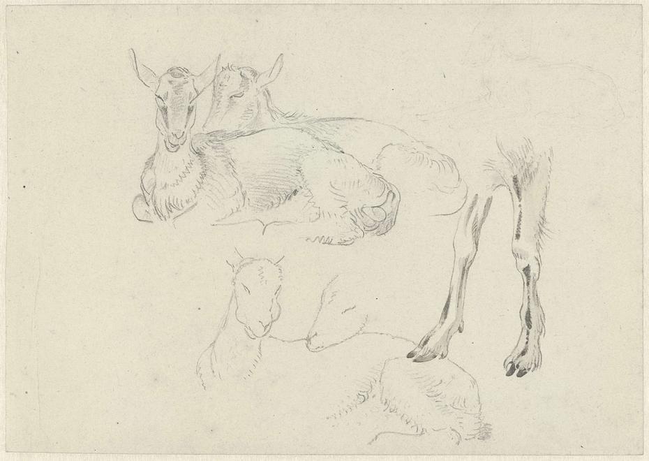 Studies of Goats