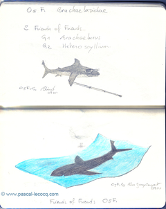 Carnet Bleu: Encyclopedia of…shark, vol.I p31 by Pascal