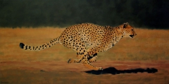 Cheeta in action