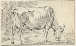 Grazende koe