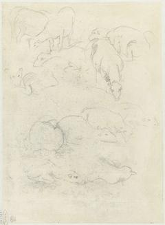 Groepen grazende en liggende schapen