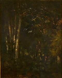 In het bos van Fontainebleau (Forêt de Fontainebleau)